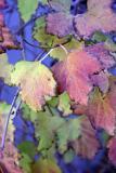 December Leaves