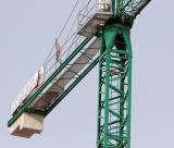 The crane should be Spain's national emblem