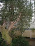 Palmenhaus028.jpg