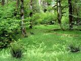 Rainforest Meadow