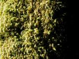 Sunlit Lichen and Fungi