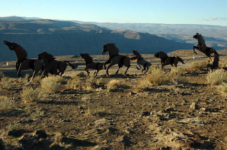 Mustangs in Motion