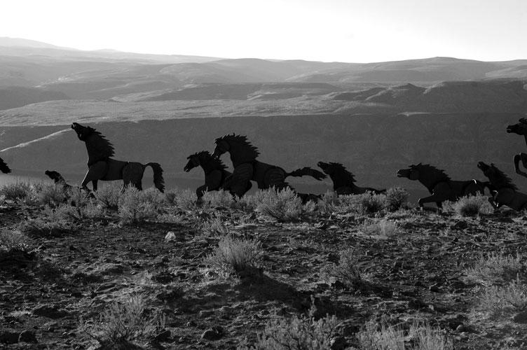 B & W Mustangs