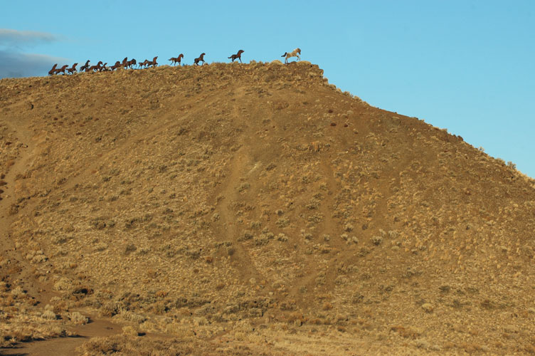 Wide View of Horses
