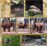 Knoxville Zoo  (page 4 of 6)