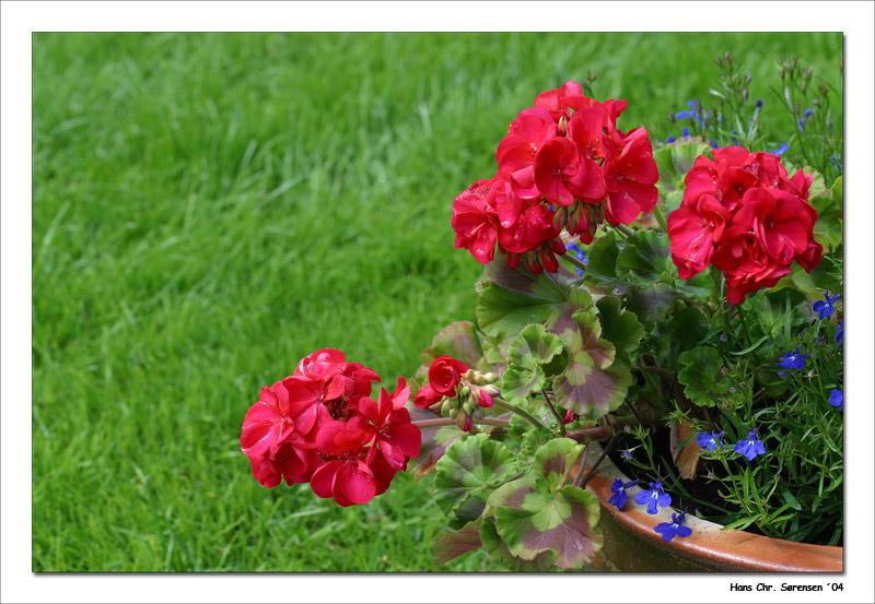 Flowers in my garden.