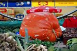 Market and giant pumpkin