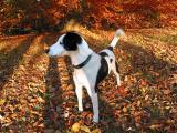 Joop's Dog Log - Monday Dec 06