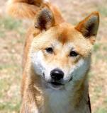 IMG_0386 dogs.jpg