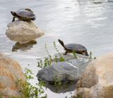 three-turtles.jpg