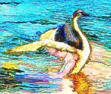 Cisne (watercolor)