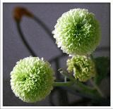 Flower VI