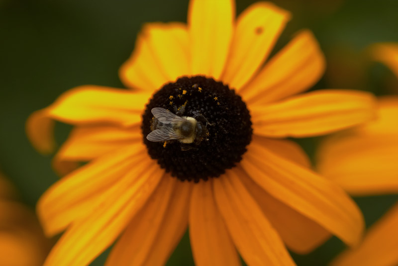 bee. from above