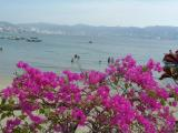 Flamboyant Flower and The Sea