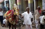 bBikaner1042_WeddingHorse.jpg
