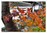 :: 京都Kyoto ::