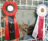 Int. Cat Show in Helsinki 4.-5.12.2004