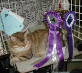 EC  Cedrik Siberian Star Best In Show on Feb. 19, 2005