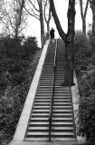 Winter stairs (9/12)