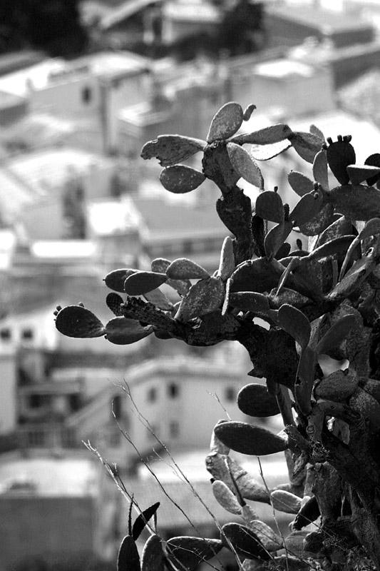 Sicilian cactus (2004)