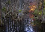 Sole's Swamp