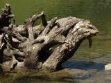 Lac de Gers : monstre aquatique