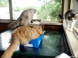 1338-cats-snaps.jpg
