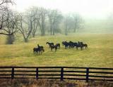 KY. Horses  Near Lexington