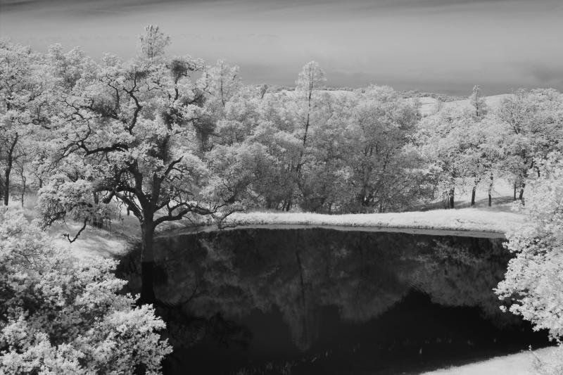 IMG26497ir snow tree 2 ps.jpg