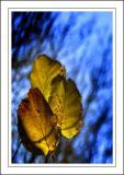 Stourhead ~ leaves'n'light