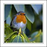 Robin 02 ~ Stourhead
