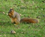 Just anothe squirrell.jpg(324)