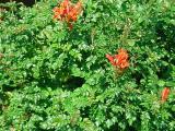 see the hummingbird in the lush green bush