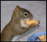 The Big Peanut
