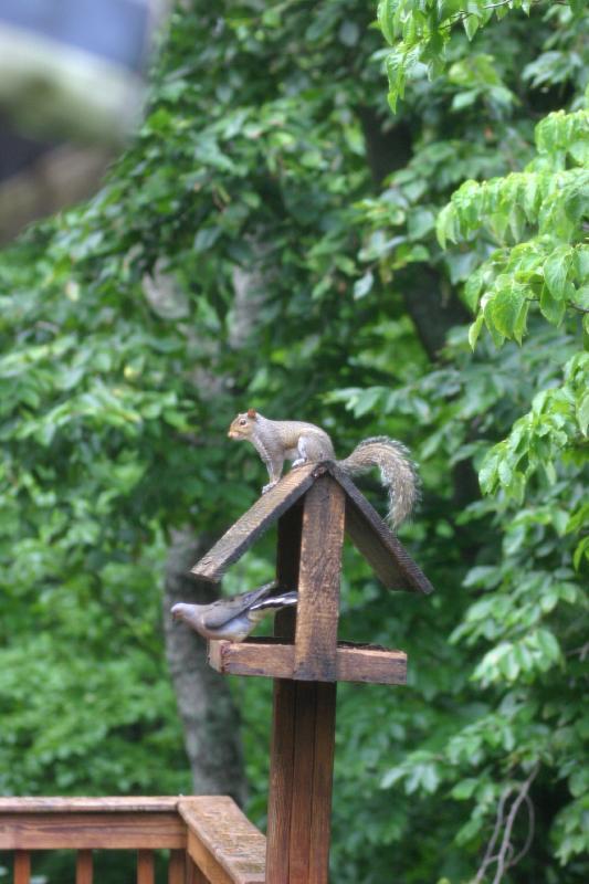 Squirrel_Bird.jpg