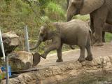 Playful Elephant Baby