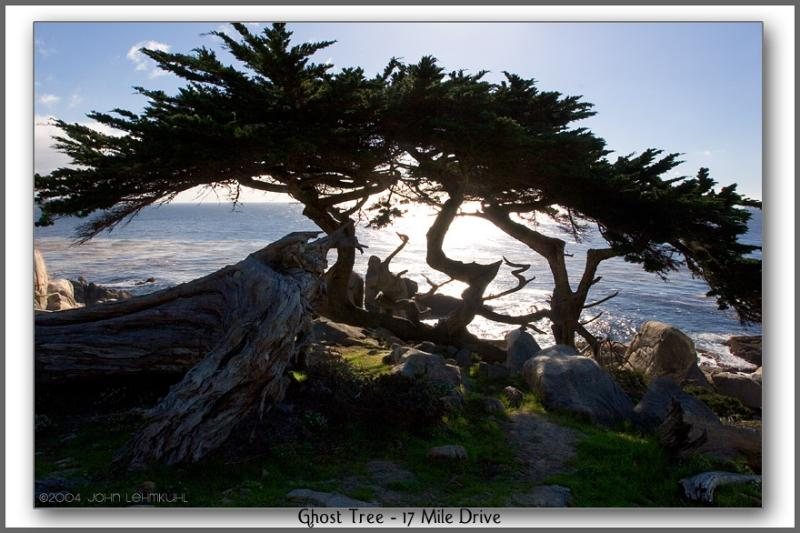 Ghost Tree on the 17 Mile Drive