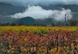 Vineyards after a winter rain