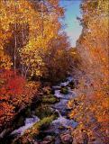 3451-Creekside-Color-Rev.jpg