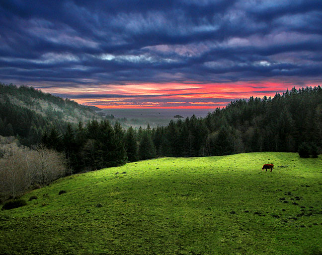 Pasture At Twilight
