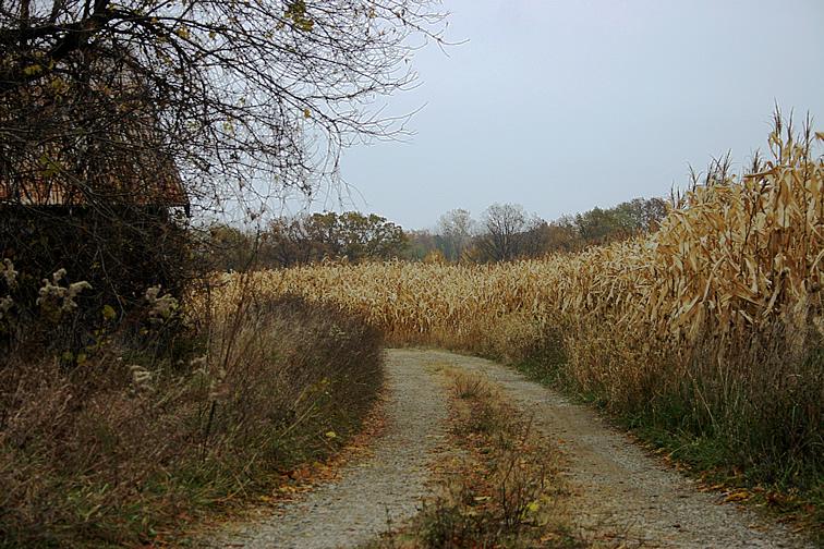 County Lane 2