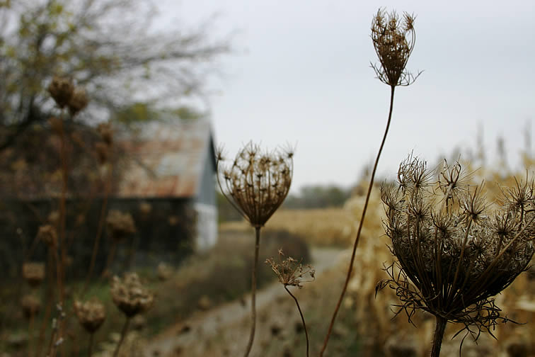 Through the weeds