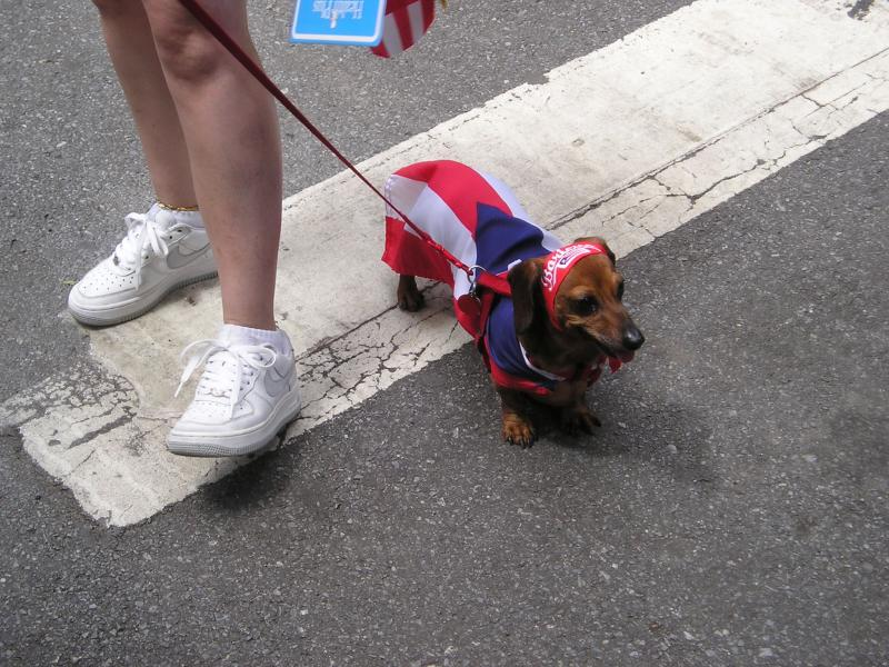 Dachshund at the Puerto Rican Day Parade