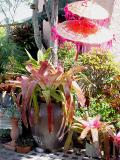 Balinese parasol and a huge colourful Neoregelia