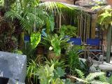 subtropicalesque deck area
