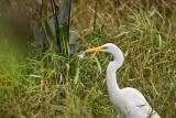White Egret0