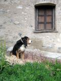 Guard dog in St Veran