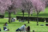 Rome, nature in blossom...