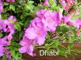 'Dhabi'