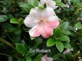 'Sir Robert'